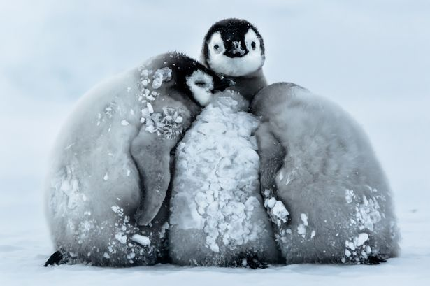 Pay-penguins_0712