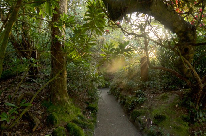 , The amazing Lost Gardens of Heligan