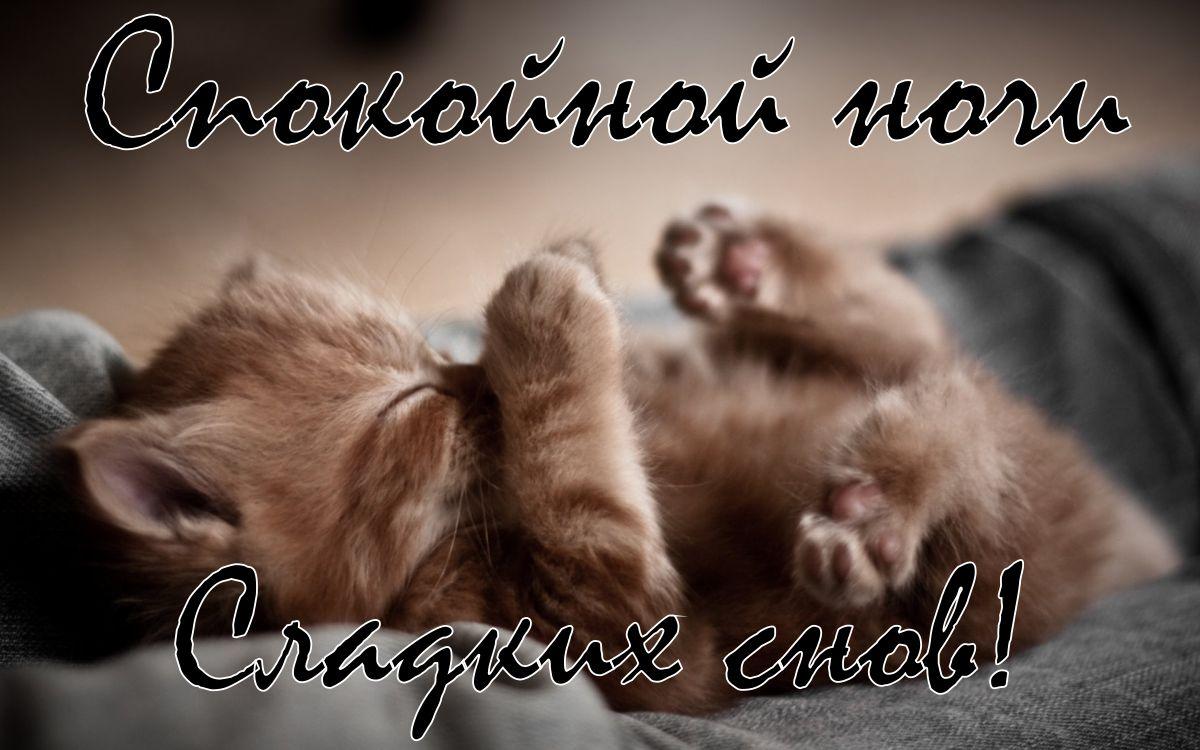 Картинки милый котик димуля сладких снов