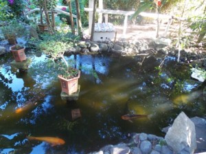 Cafe Nubes Garden Pond