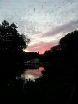 Stanborough Lake, Hertfordshire, UK. The last night in my sister's old neighbourhood