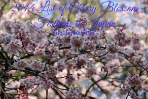 List of Cherry Blossom Festivals in Japan for 2014