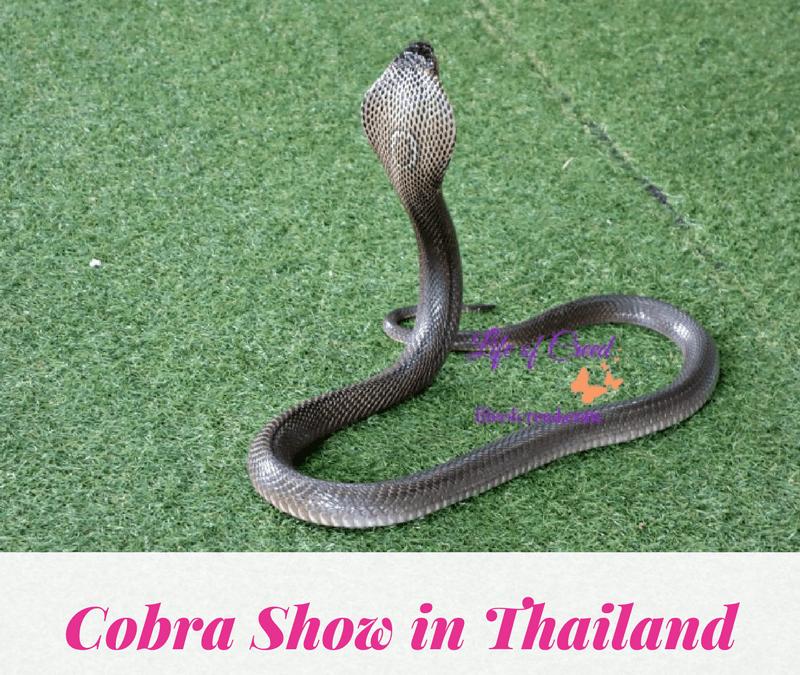 Cobra Show | Thailand