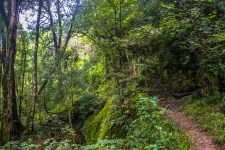 The trail climbs steadily up, towards the gorge and the Amphitheater, as it traverses the ride of a sharp ridge line. As it winds it's way in and out of the rippling sides of the mountain, the trail dips into verdant, lush, indigenous forests.