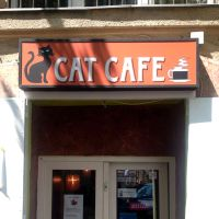 Visiting a Cat Cafe in Budapest