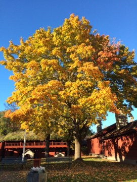 Some beautiful color contrasts we saw at Wädkoping.