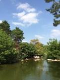 Flamingoes in Parc de la Tete d'Or