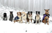 Another row of snowdogs.