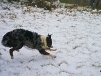 This photo pretty much sums up Lumen's entire experience of being in the snow.