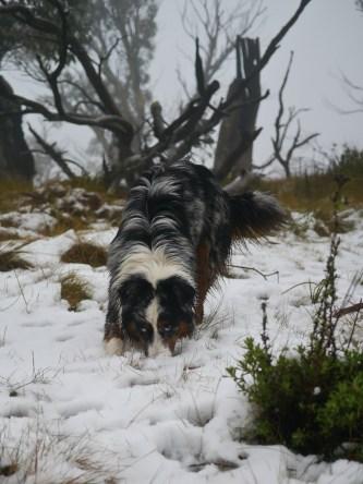Snow snorkelling