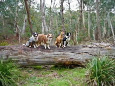 Mini-pack on a log
