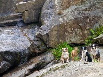 "Dogs by the falls. We have named them ""Grand Falls"" for obvious reasons."