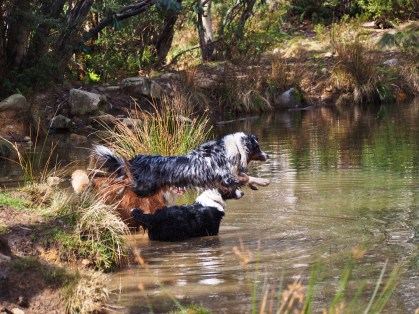 Fetching a stick in water: part 2