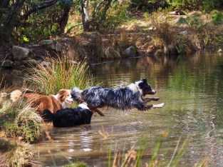 Fetching a stick in water: part 3