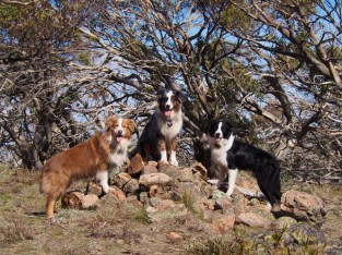 Found some little cairn while off-trail. We told the dogs to get on it haphazardly. They posed like this.
