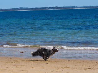 And now for another 7 photos of Lumen's full-speed running at the beach