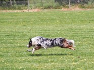 Stretched out running with a skinny-dog
