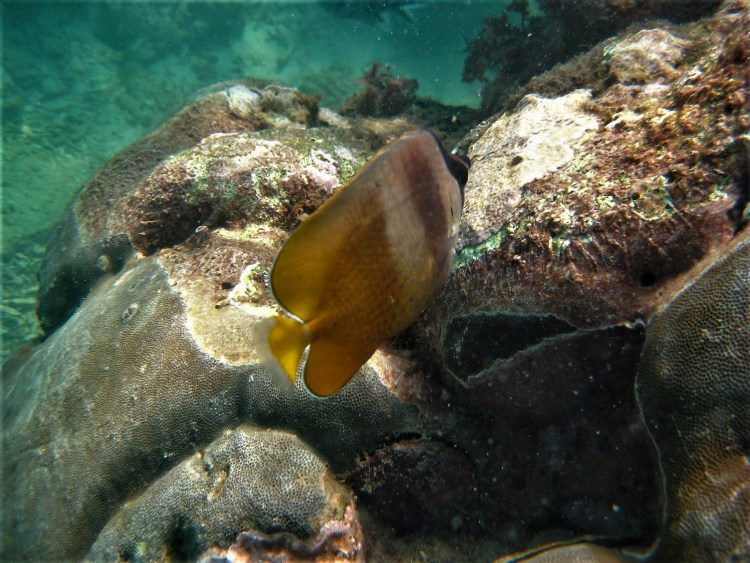 Life of Shal_Essential snorkeling tips for Bali