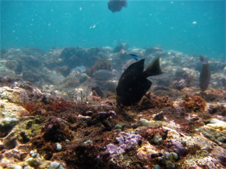 Life of Shal_Essential snorkeling tips for Bali_1
