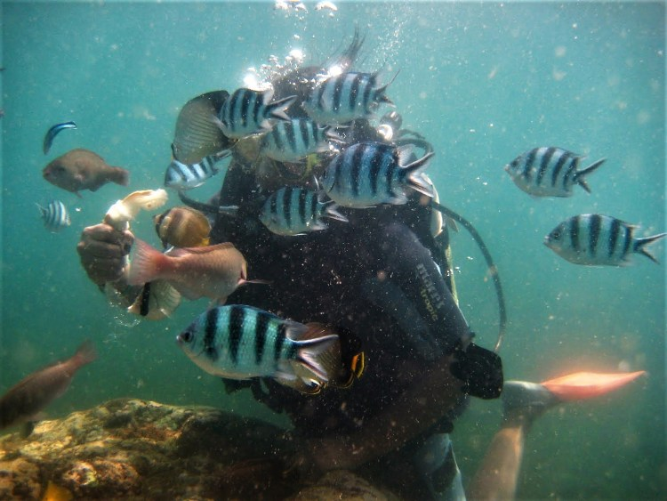 Life of Shal_Essential snorkeling tips for Bali_3