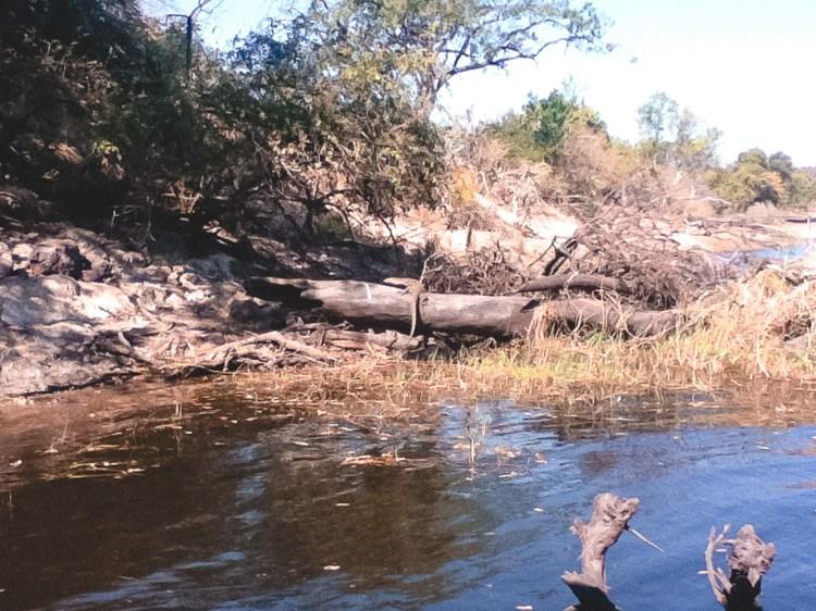 Chobe National Park, Animal Safari