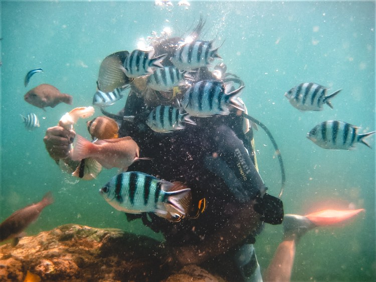 Bali, Undersea diving, feeding fish