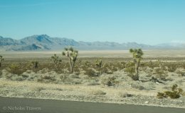 Cactus, North of Las Vegas