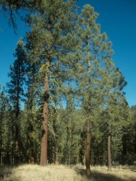 Oregon Moss Greating