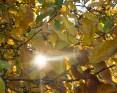 Fall Star Sun