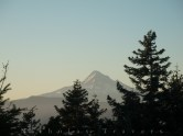 Mt Hood Through the Trees of Table Mountain.