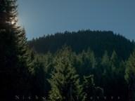 Sun down into the trees, towards the ridge