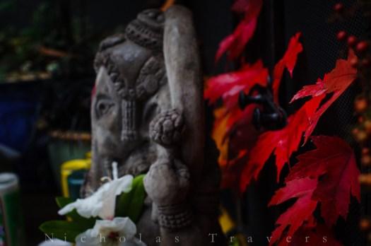 Thank you Ganesha for dancing this fall.
