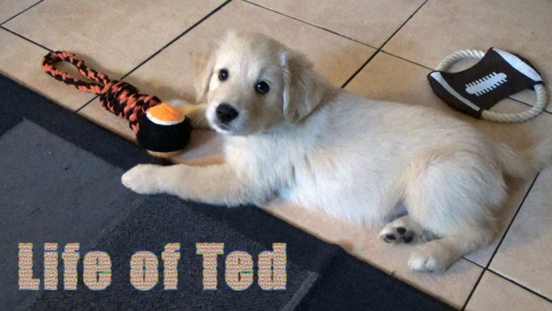 Ted the Dog's Blog on Being a Dog