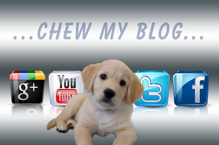 Socialise Puppies to be Friendly and Kind