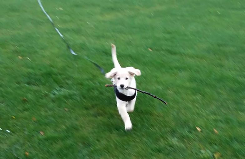 Ted Running with Stick