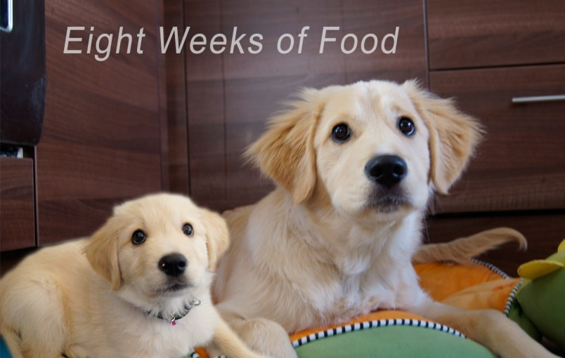 Feed Your Puppy Regularly