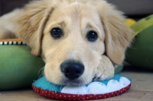 Dog day care in west edinburgh