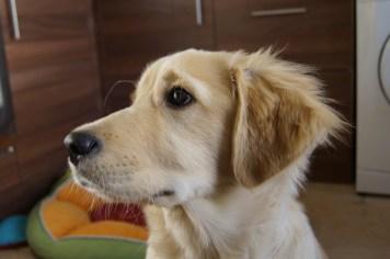 Losing My Puppy Good Looks