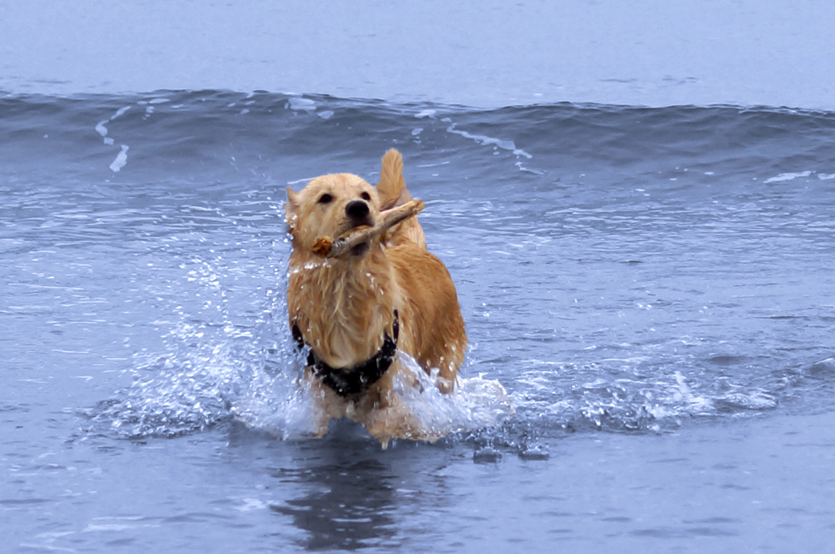 Ted Splashing About On The Beach at Gullen