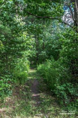Alton Pinnacle Loop Trail, Alton Ontario, Beautiful Places in Ontario, Beautiful Towns in Ontario, Attractions Ontario,