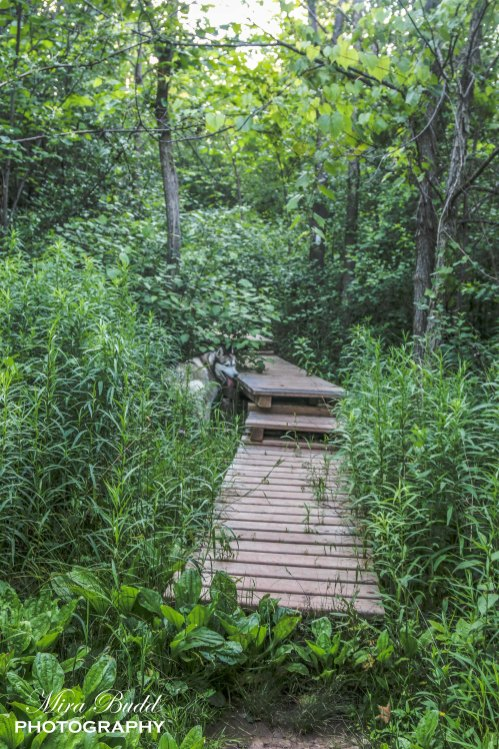 Things to See in Caledon, Hiking Trails in Ontario, Beautiful Places in Ontario, Things to See in Caledon, Places to visit in Ontario,