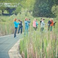 Marsh in Ontario, Terra Cotta Conservation Area, Trail Ontario,