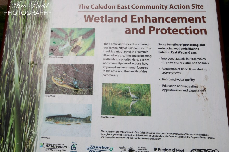 Wetlands in Ontario, Trans Canada Trail, Hiking Trails in Ontario,