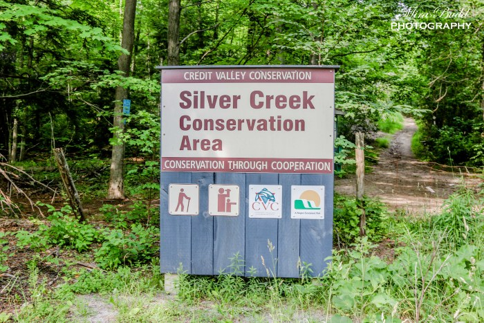 Hiking Trails in Ontario, The Bruce trail, Best Hiking Trails in Ontario.