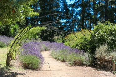Ashcombe Maze and Lavender Garden, London Bridge Ocean Beach, Dromana Victoria Australia, things to See in Australia, Places to Visit in Victoria Australia, Melbourne Beaches, Beautiful Beaches Australia, Great Restaurants in Victoria,