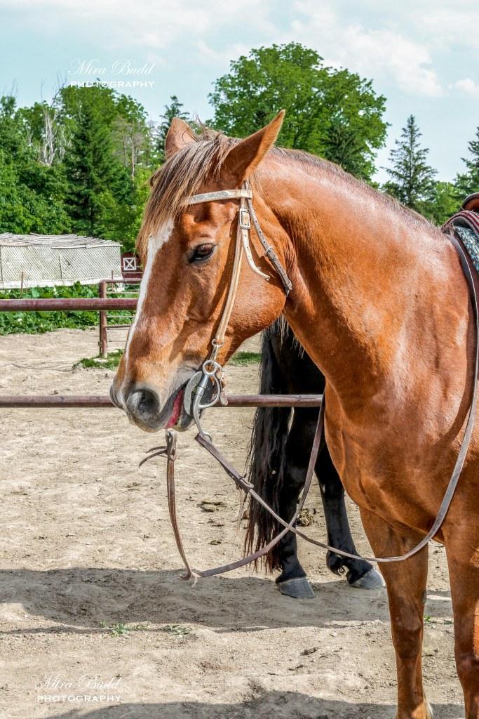 Claireville Ranch Horseback Riding , Caledon Horseback Riding, Brampton Horseback Riding, Best Horseback riding in Caledon, Horseback Riding Trail, Things to do in Ontario, Beautiful Places in Ontario,