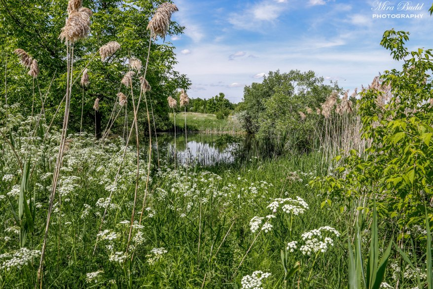 Caledon East Ontario, Beautiful Places in Ontario, Best Kept Trails,  Things to Do in Caledon,