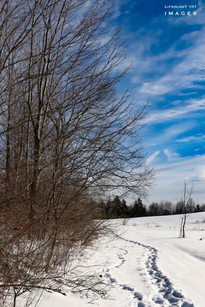 Hiking Trails New York, Hiking Trails Near Ellicottville, Snowshoe Hiking Trails New York,