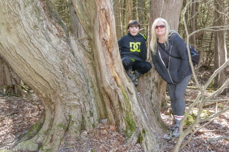Caledon Hiking Trails, Ontario Hiking, Best Ontario Hiking Trails, Orangeville Hiking Trails, Bruce Trail Hiking,