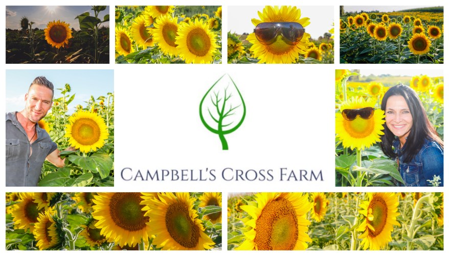 Caledon Sunflower Farms, Beautiful Places in Ontario, Sunflower Fields Ontario,